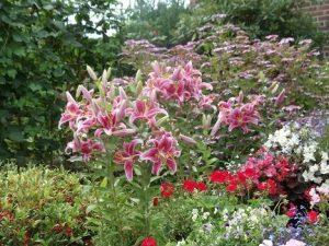 Lovingly tended garden