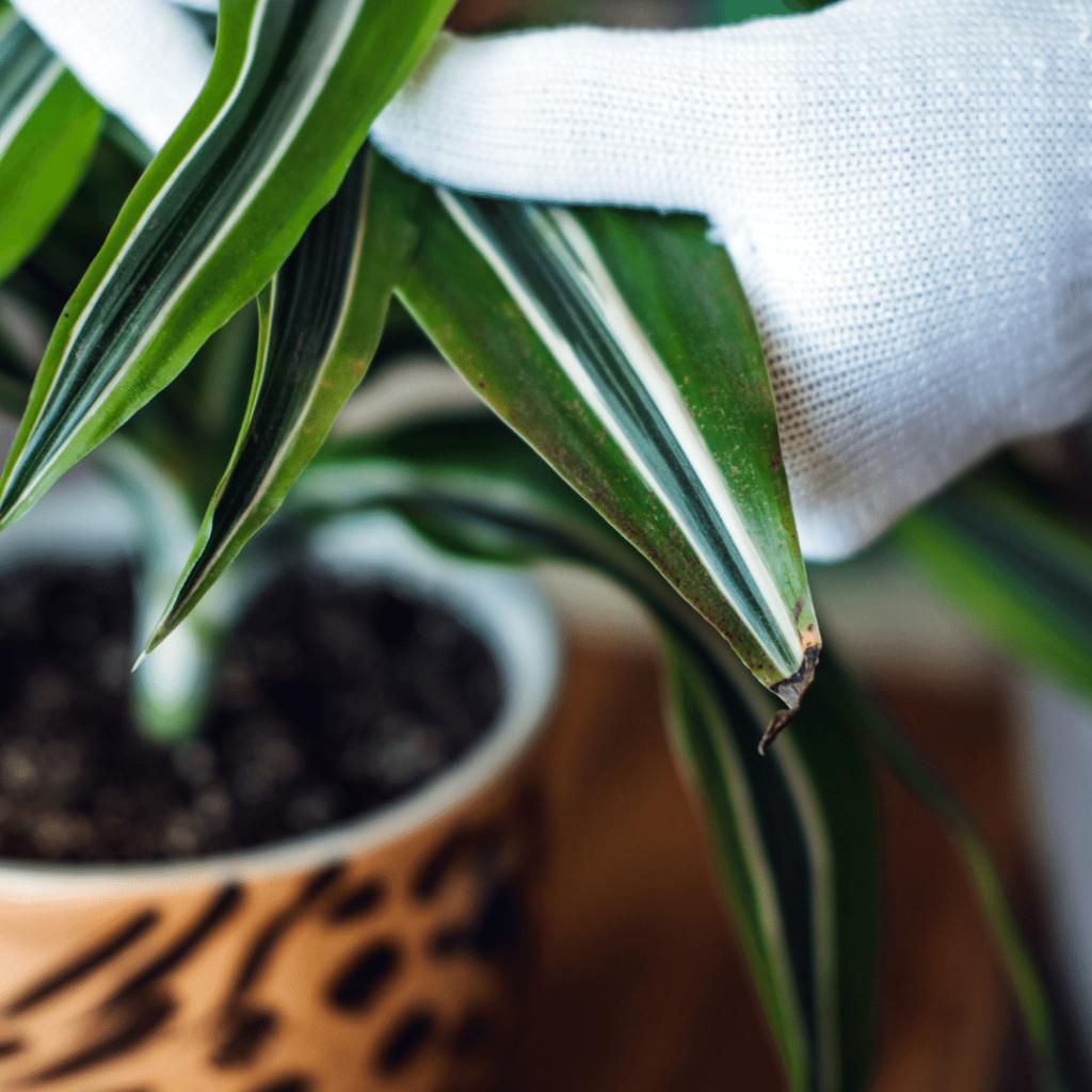 House plant image courtesy of Canva